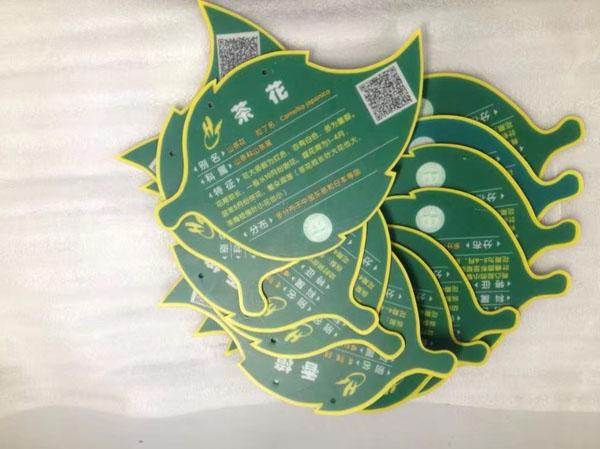同学们设计制作的植物标牌